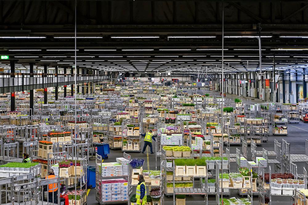 La bourse des fleurs à Aalsmeer, la plus importante du monde et la plaque tournante du commerce mondiale de la fleur. Sur cette plaque tournante qui fournit 30 % du marché européen de la fleur, des milliers de variétés sont transportées en seaux sur de longues rames électriques. 21 millions de fleurs et 2 millions de plantes y transitent par jour. 12 milliards de fleurs et de plantes vendues chaque année. 12.000 personnes y travaillent. Aalsmeer s'impose comme le Wall Street de la fleur coupée et de la plante en pot : 84 % des exportations mondiales de fleurs, 4 milliards d'euros de chiffre d'affaires annuel et des prévisions de 40 % de croissance sur la décennie à venir.