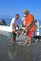 Rodrigo & J. With Loggerhead Sea Turtle