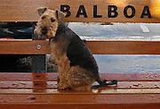 Dog Sitting on a Bench at Balboa Island