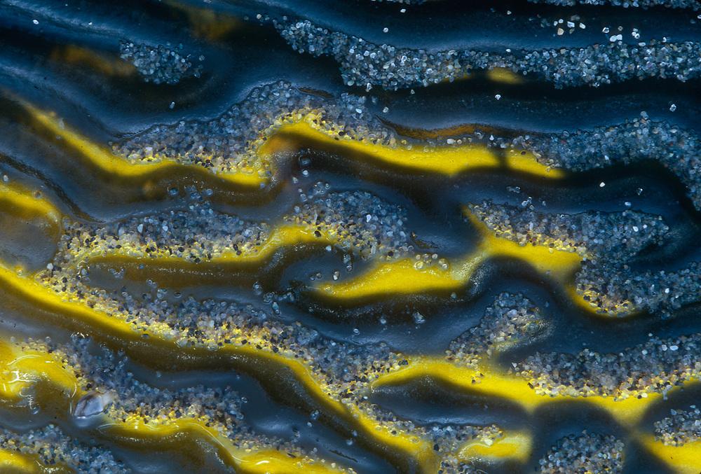 Kelp detail, Pacific Coast, Olympic National Park, Washington, USA