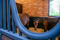 Stables for the auction<br /> Brussels Stephex Masters<br /> © Hippo Foto - Sharon Vandeput<br /> 27/08/21