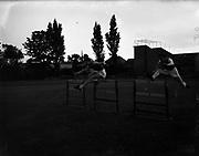 Kinsella, E. F. (St James' Gate) (centre) winner of 120 yard Hurdles NACA Championships<br /> 06/07/1952