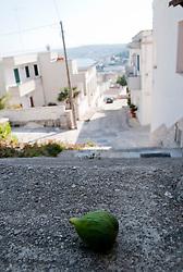 Castro Marina - Salento - Puglia - Un albero di fico selvatico lascia cadere i propri frutti non raccolti.(l'immagine è stata leggermente ruotata).