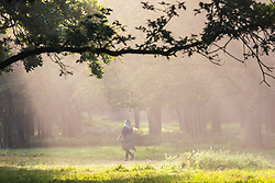 Licensed to London News Pictures. 06/09/2021. London, UK. A walkers enjoys a warm misty start to the day in Richmond Park, south-west London as weather forecaster predict a mini-heatwave for September this week with temperatures hitting over 29c tomorrow. Photo credit: Alex Lentati/LNP