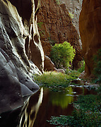 Narrows of Mineral Creek in the Dripping Springs Mountains, Pinal County, Arizona.
