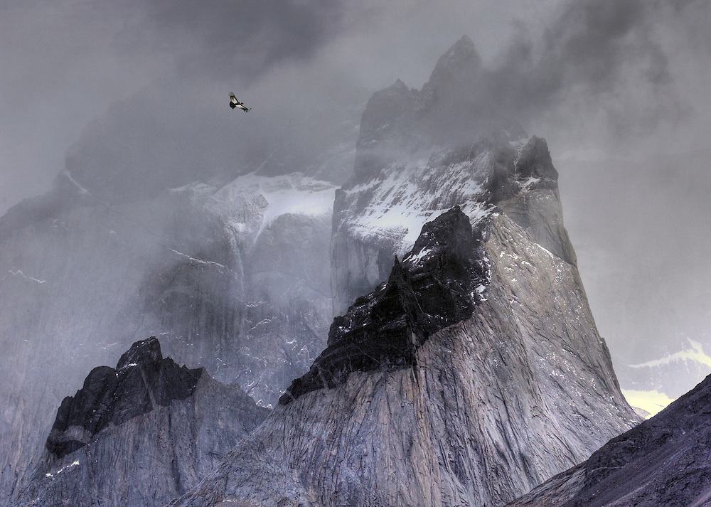 Andean condor, Vultur gryphus, soaring over mountain peaks, Torres Del Paine, Chile