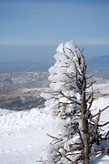 tree covered with snow at the summit of Mount Hermon, Israel