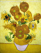 Painting of Sunflowers, 1888. By Vincent van Gogh. Oil on Canvas.