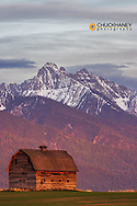 Rustic old barn in evening light with Mission Mounbtains in Pablo, Montana, USA