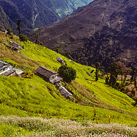 Verdant rice paddies stretch up the lower slopes of the Annapurna massif near Ghandriung village in the Nepal Himalaya.