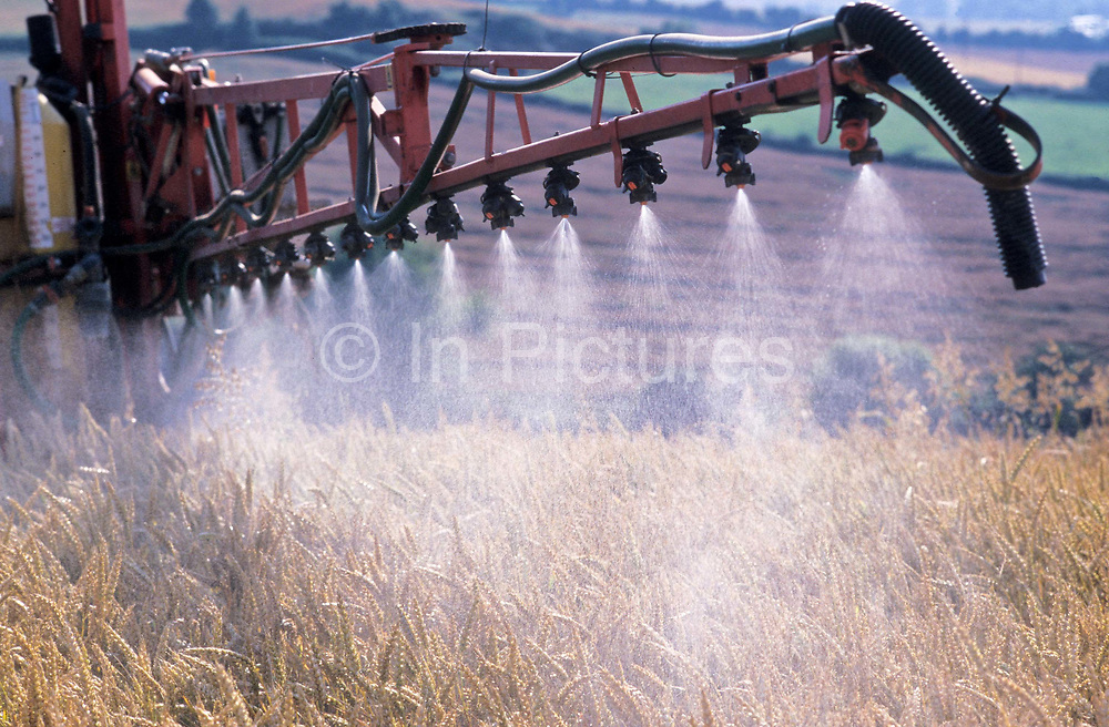 A field of Barley is being sprayed with pesticides, Someset, UK.