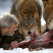 Werner Freund, a former German paratrooper, established a wolf sanctuary in Merzig, Germany. He has raised more than 70 animals since 1972. Spread over 25 acres, Wolfspark is currently home to 29 wolves forming six packs from European, Siberian, Canadian, Arctic and Mongolian regions. Werner has to behave as the wolf alpha male of the pack to earn the other wolves respect and to be accepted. Werner Freund died at the age of 80 years in February 2014.