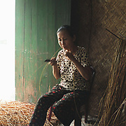 Woman preparing 'te' grass for weaving into baskets in Luu Thuong village, Ha Tay province, Vietnam. With Vietnam's growing population making less land available for farmers to work, families unable to sustain themselves are turning to the creation of various products in rural areas.  These 'craft' villages specialise in a single product or activity, anything from palm leaf hats to incense sticks, or from noodle making to snake-catching. Some of these 'craft' villages date back hundreds of years, whilst others are a more recent response to enable rural farmers to earn much needed extra income.