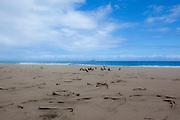 Birds, Kalalau Beach,Napali Coast, Kauai, Hawaii