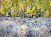 autumn forest and frosted meadow in early morning, Sun Valley, Idaho