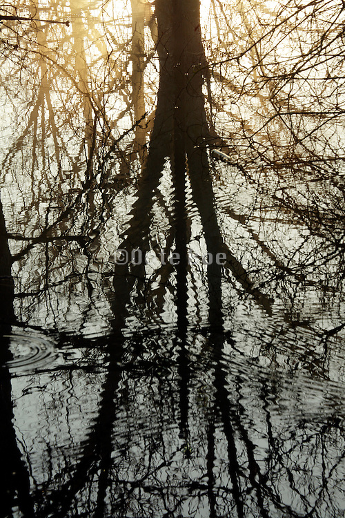 light with trees reflecting in water