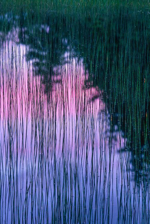 Abstract design, evening light, Tongass National Forest, Alaska, USA