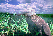 Limited Edition: Double Exposure using a Nikon film camera while in the Florida Everglades. Fine art photograph