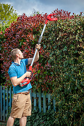 Cutting a tall hedge with a long handled hedge trimmer
