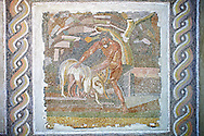 Roman  floor mosaic depicting pastral scenes and scenes from mythology  from  a room of a villa  in the locality Baccano near the Via Cassia, Rome. end of 2nd and beginning of the 3rd century AD. National Roman Museum, Rome, Italy .<br /> <br /> If you prefer to buy from our ALAMY PHOTO LIBRARY  Collection visit : https://www.alamy.com/portfolio/paul-williams-funkystock/national-roman-museum-rome-mosaic.html <br /> <br /> Visit our ROMAN ART & HISTORIC SITES PHOTO COLLECTIONS for more photos to download or buy as wall art prints https://funkystock.photoshelter.com/gallery-collection/The-Romans-Art-Artefacts-Antiquities-Historic-Sites-Pictures-Images/C0000r2uLJJo9_s0