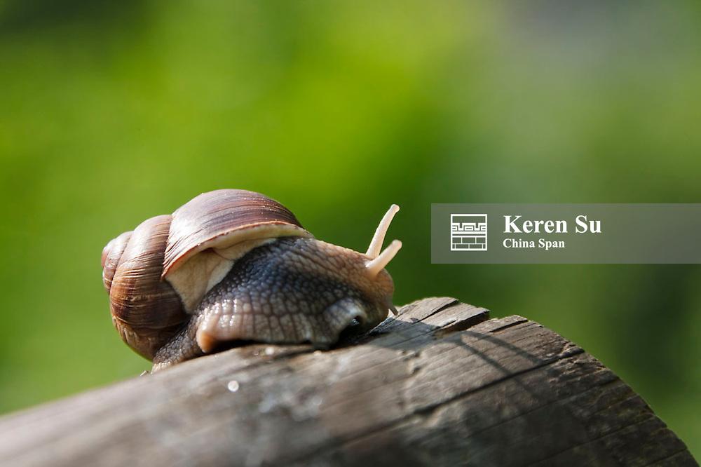 Snail, Liechtenstein