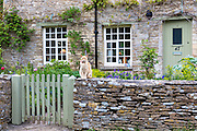 Cat, Felis catus, on an old drystone wall at a typical English cottage in the village of Eastleach Martin in The Cotswolds, UK