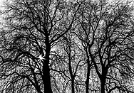 Mezmerizing tree branches resemble veins and arteries.