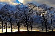 Tree Silhouettes, Peak District