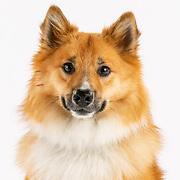 20191013 K Producers Dogs