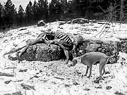 Elk kill on trail up to Estes Lake