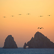 Silhouette of the Arch at Cabo San Lucas with flock of pelicans flying across.  BCS.