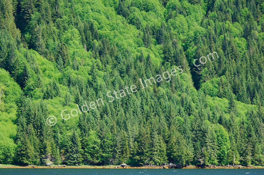 Forest tree patterns, Alaska.
