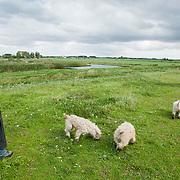 Nederland Delft 17-09-2010 20100917     A4 Delft - Schiedam wordt definitief verlengd,  er  is begin deze maand officieel besloten tot de aanleg van het stuk snelweg waarover zo'n vijftig jaar is gesproken. Natuurgebied dat in de toekomst zal moeten wijken na het doortrekken van de A4, vrouw laat haaar honden uit. Rijkswaterstaat en het ministerie van VWS hebben dat laten weten.Over de nieuwe verkeersader wordt al decennialang gesteggeld, vooral omdat de weg het natuurgebied Midden-Delfland doorboort...De zeven kilometer asfalt tussen Delft en Schiedam doorkruist straks verdiept of via een tunnel het natuurgebied tussen de twee steden. Het belangrijkste pluspunt is dat de A13 wordt ontlast. Op rijksweg A13 staat dagelijks de voor de economie schadelijkste file van Nederland. Met het project A4 Delft-Schiedam willen lokale en regionale overheden en het Rijk de problemen rond bereikbaarheid en leefbaarheid op en rond de A13 en de A4 Delft-Schiedam oplossen. Midden Delftland. , relaxen, relaxing, rijbaan, rijbanen, route, ruimte, ruimtelijk, ruimtelijke, ruimtelijke omgeving, ruimtelijke ordening, Ruimtelijke plannen, ruimtelijke planning, ruimtelijke visie, ruraal, rurale omgeving, rustiek, rustieke, rustieke omgeving, rustig, rustige, space, spare time, spoor, stedelijke vernieuwing, stil, streekplan, sunny, terrein, The Netherlands Holland Nederland, toekomst, toekomstige plannen, toekomstplannen, tracé, traject, uitgestrektheid, verbinding, verbindingen, vergezicht, vergezichten, verkeer en vervoer, verkeer en waterstaat, verkeersnet, verlengen, vernieuwing, vervoer, vewezenlijken, vrije tijd, vrouw, vrouwen, walking the dog, wandelen, wandelingetje maken, wegenbouw, wegenbouwplanologie, wegennet, wegnet, wegverbinding, wei, weide, weidegang, weiland, wijds, wijdsheid