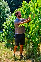 France, Pyrénées-Atlantiques (64), Pays Basque, Saint-Etienne-de-Baïgorry, vin d'Irouleguy, Enaut Costera du Domaine Ameztia // France, Pyrénées-Atlantiques (64), Basque Country, Saint-Etienne-de-Baïgorry, Irouleguy wine