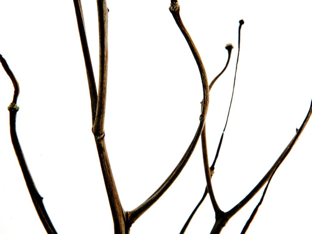 Organic Still Life image of a branch shot in studio