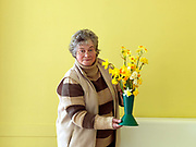 Daffodil grower and member of The Northern Group of the Daffodil Society with a selection of her daffodils and narcissi for showing at Pilley Community Centre, South Yorkshire.