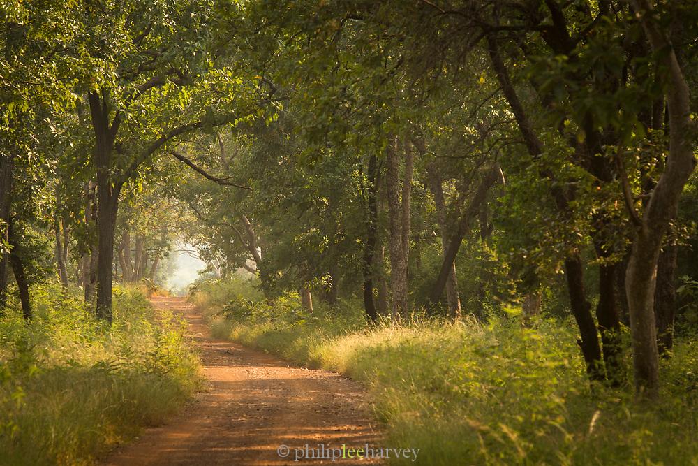 Landscape of vehicle track among trees, Tadoba National Park, India