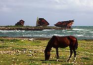 Horse and ship wreck in Gibara, Holguin, Cuba.