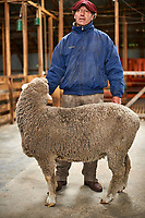 Sheep shearing demonstration at an Estancia in Patagonia. Image taken with a Nikon D3s camera and 50 mm f/1.4 lens (ISO 200, 50 mm, f/2, 1/160 sec).