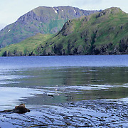 Sea Otter, (Enhydra lutris) Mother and baby in sheltered bay of Adak Island. Aleutian Islands. Alaska.
