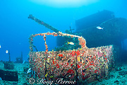 bow gun on C-58 shipwreck off Puerto Morelos, near Cancun, Yucatan Peninsula, Mexico ( Caribbean Sea ); barjacks, yellowtail snapper, and sergeant major damselfish swimming around wreck; hull is covered with sponges, soft corals, and fire coral