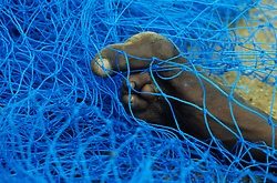 Using Hand and Feet. A fisherman holds a blue fishernet with his toes enabling him to work with his hands.