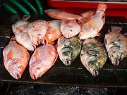 03 APRIL 2015 - CHIANG MAI, CHIANG MAI, THAILAND:  Farm raised tilapia fish in a market in Chiang Mai, Thailand.        PHOTO BY JACK KURTZ