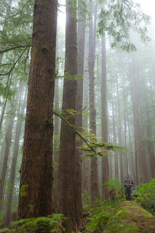 Zach Podell-Eberhardt (left) and Henry walk through a grove of large trees along the West Coast Trail, British Columbia, Canada.