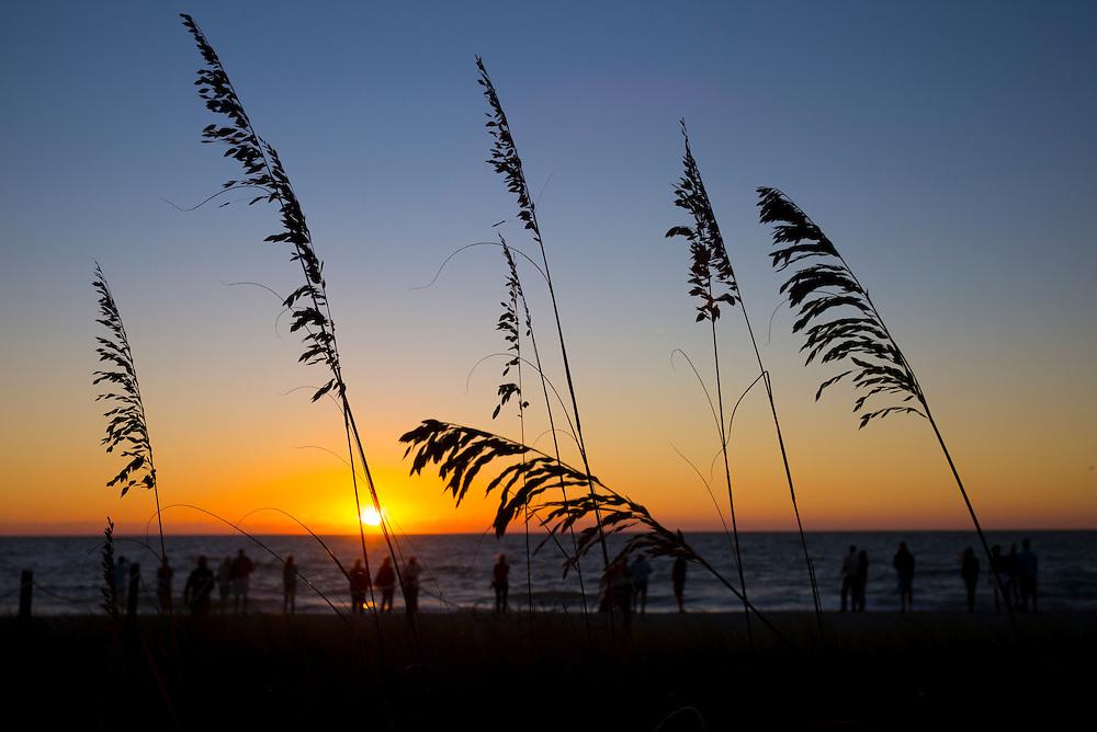 Sea oats on the beach at sunset on Captiva Island in Florida, USA