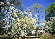 Historic Bartram's Gardens, Springtime Flowering Trees, Historic House, Philadelphia Gardens and Arboretums, Philadelphia, PA