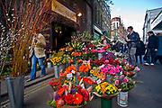Londyn, 2009-03-06. Kwiaciarnia, Brought Market