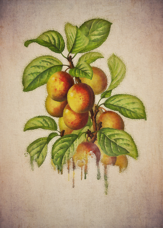 When you think of plums, particularly in terms of how they are depicted here, what do you imagine? It is easy for our thoughts to turn to certain times of the year. Plums can be a seasonal treat for many. For others, they remind them of everything the summer season has to offer.<br /> -<br /> BUY THIS PRINT AT<br /> <br /> FINE ART AMERICA<br /> ENGLISH<br /> https://janke.pixels.com/featured/plums-jan-keteleer.html<br /> <br /> <br /> WADM / OH MY PRINTS<br /> DUTCH / FRENCH / GERMAN<br /> https://www.werkaandemuur.nl/nl/shopwerk/Pruimen---Antieke-tekening-van-Pruimen/479638/134