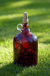 Jar of mulberries