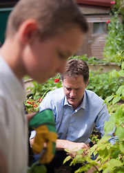 ***EMBARGO 12.01AM Tuesday 17 June.***© Licensed to London News Pictures. 12/06/2014. Wallington, UK. Nick Clegg picks raspberries with schoolchildren.  Ahead of an announcement on new food standards for schools, Deputy Prime Minister Nick Clegg and celebrity chef Lorraine Pascale visit Foresters Primary School where they picked fruit with schoolchildren from the school's vegetable patch, prepared a fruit salad, helped the school chefs to serve food and sat with the children as they ate lunch. Photo credit : Stephen Simpson/LNP